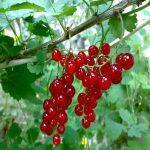 ¿Cómo plantar árboles frutales?.