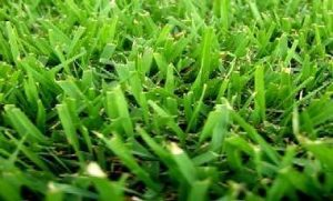 como-plantar-grama