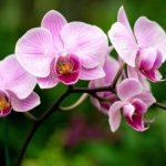 Cómo plantar orquídeas