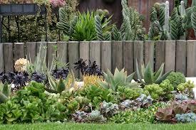 nuestro-jardin-de-suculentas