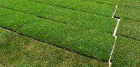 Cómo plantar tepes en nuestro jardín