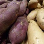 Plantar Ñame. Un tubérculo importante en la alimentación