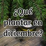 Qué plantar en el mes de diciembre